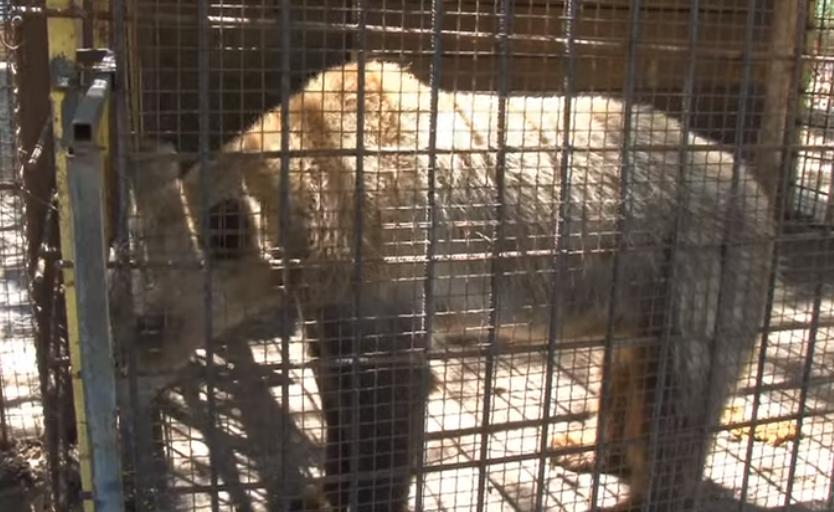 Од глетката ќе ви надојдат солзи: Во несоодветни услови Зоолошката градина во Штип чува мече (ФОТО)