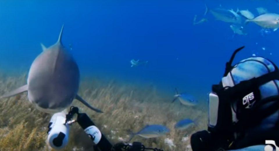 """Опасна, но и забавна средба: Нуркач снимаше ајкула, па таа го возврати """"ударот"""" (ВИДЕО)"""