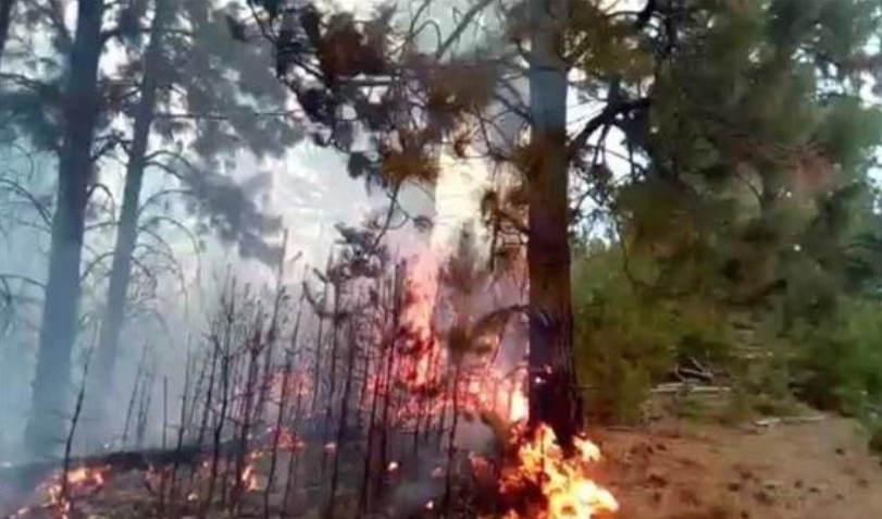 Пожар во Општина Чашка, гори багремова шума