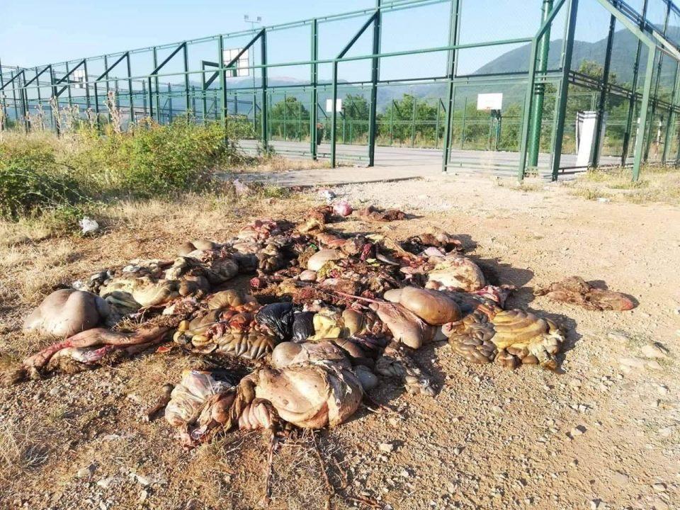 ФОТО: Еколошка катастрофа кај струшко Калишта