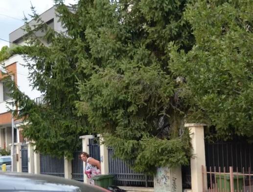 ВЕЧЕР СО ФОТО НА ЛИЦЕ МЕСТО: Катица Јанева седи дома и чека развој на настаните