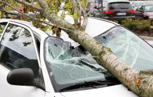 Ужасно невреме во Србија: Неколку повредени, ветрот корнеше дрвја, има огромни штети (ВИДЕО)