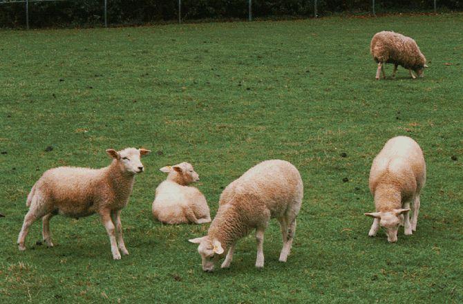 Ветеринарниот факултет со потврда за антракс, нема заболени меѓу нивните вработени