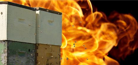 Пожар во скопското село Бучинци, зафатени околу 50 сандаци со пчели