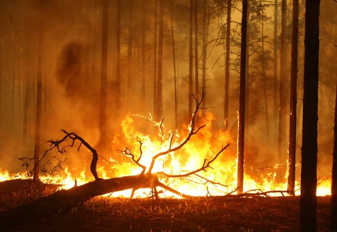 Над 130 шумски пожари во Русија, во гаснењето учествуваат повеќе од 1.000 луѓе