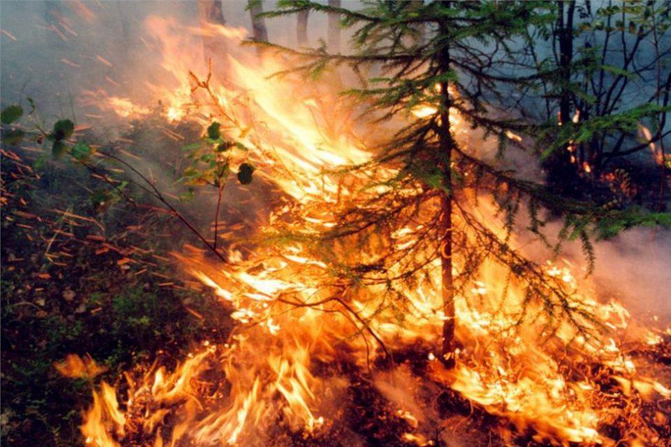 Видео од село Велмеј, пожарот се приближува до првите куќи