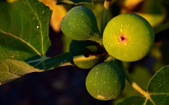 Кралско овошје кое го намалува крвниот притисок