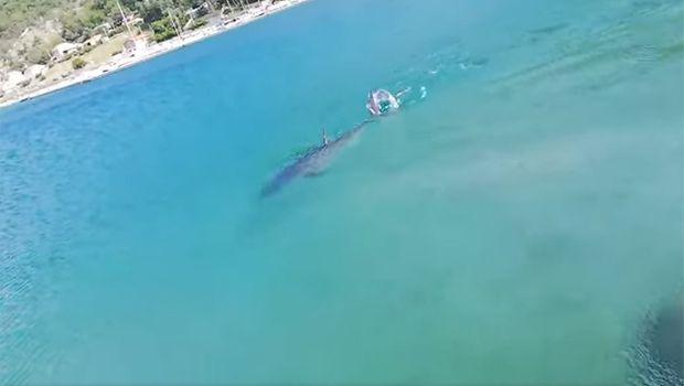 Паника на Јадранот:  Покрај брегот снимена голема риба, капачите во шок (ВИДЕО)