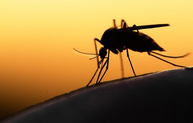 Што се случува во телото кога ќе ве касне комарец?