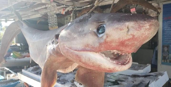 """Албанските рибари уловија ајкула од опасниот вид """"дем"""""""