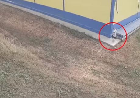 Ужасна снимка од Русија: Жена се породи зад грмушка и го остави бебето во кеса зад продавница