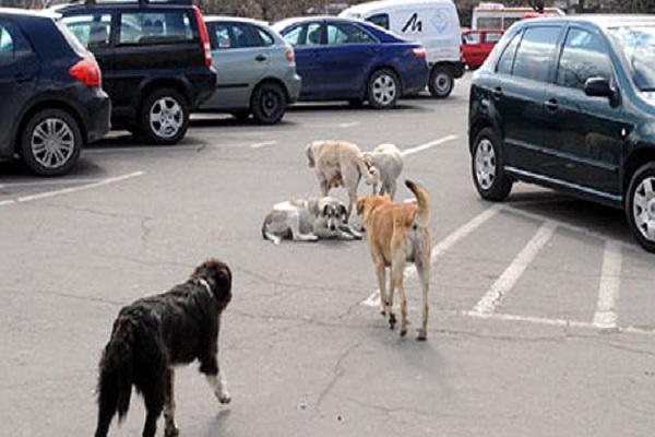"""Во Тетово """"врие"""" од улични кучиња, граѓаните пријавуваат напади секој ден"""