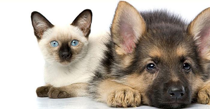 500 евра казна за напуштање миленик