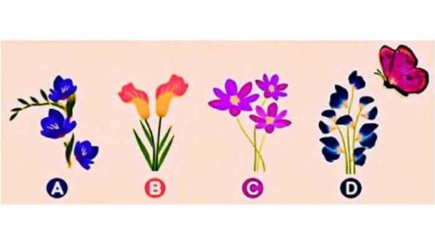 На кој цвет ќе слета пеперутката? Вашиот одговор одредува какви сте во врската