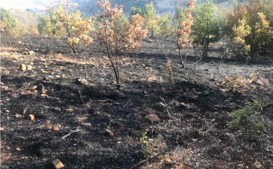 Изгаснат е шумскиот пожар кај кочанското село Пантелеј