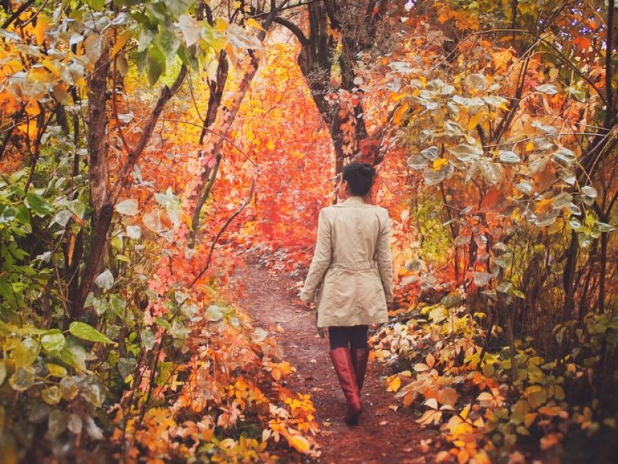 5 причини поради кои есенските прошетки носат најдобри резултати