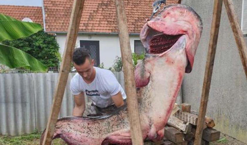 """""""Тука луѓето доаѓаат за да се искапат, а јас фатив ѕвер од 103 кила"""": Ова не е рибарска лага (ФОТО)"""