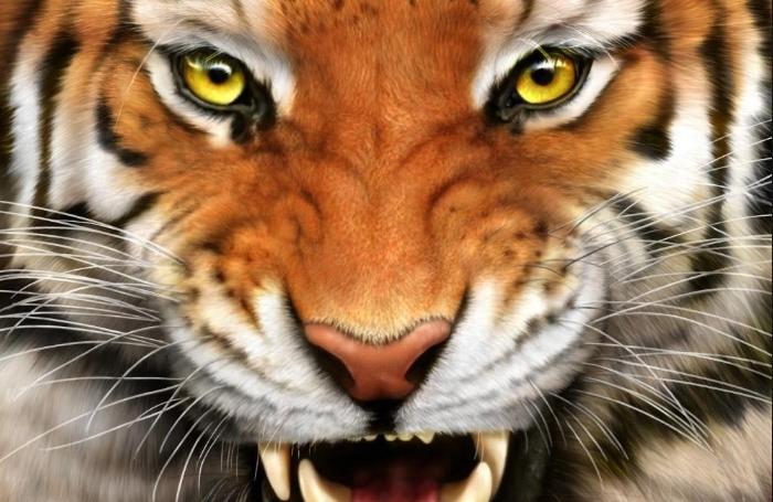 ХОРОР ВО ИНДОНЕЗИЈА: Два тигри избегаа од зоолошка градина – настрада чуварот