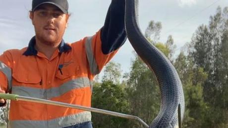 ФОТО: Огромна змија фатена во предградие во Австралија- мештаните преплашени