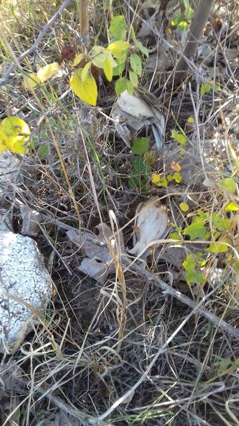 ФОТО: Италијански ловци со недозволени средства за лов ловеле прелетен дивеч во Миравци