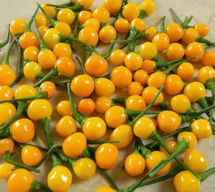 Ја има само во лукзусни ресторани: Килограм од овие пиперки чинат 23.000 евра (ФОТО)