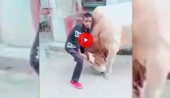Фаќаше бик за рогови, па си го доби заслуженото!