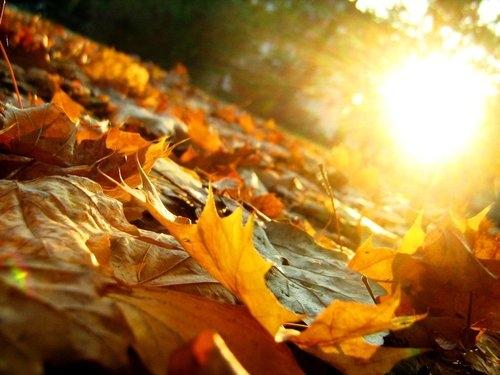 Сонце и високи температури и следната недела