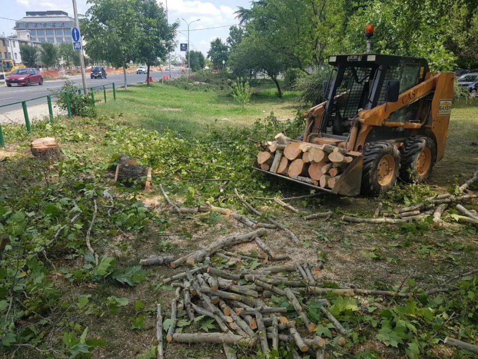Мицковски: Градите и сечете дрва како луди, а изјавувате дека само садите