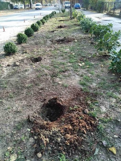 "Не издржаа ниту една ноќ: Украдени новозасадените дрвца кај поликлиника ""Чаир"" (ФОТО)"