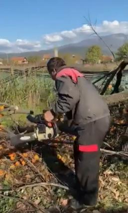 Трипуновски: Додека Заев, Љупчо и Трајан се луксузираат на државен трошок земјоделците ги сечат родните дрва со јапонско јаболко