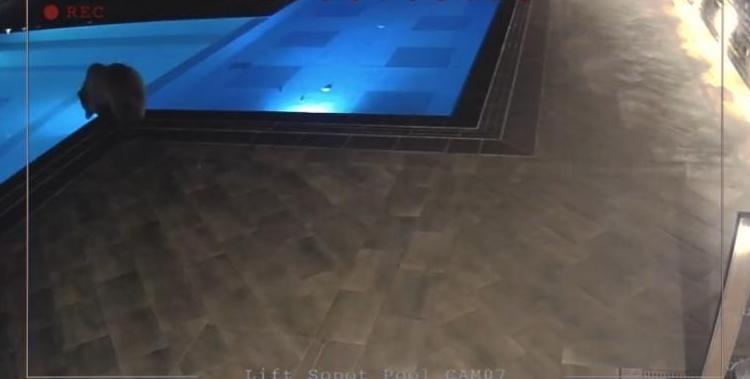 ФОТО: Мечка пливаше во базен во хотел во Бугарија