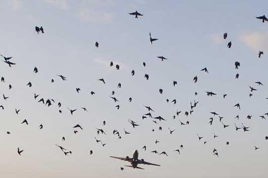 Се урна индиски МиГ-29, го собориле птици