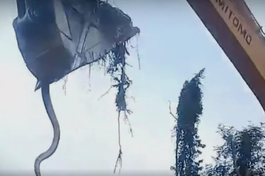 ВИДЕО: Со багер случајно ископале џиновска анаконда па едвај се ослободиле од неа