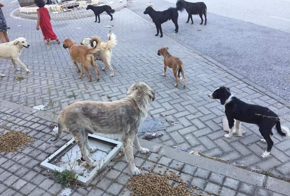 Уште две лица: Искасани граѓани од кучиња скитници стана секојдневна слика во Скопје