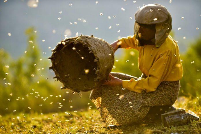 """""""Медена земја"""" со нови награди за најдобар документарец и за кинематографија"""
