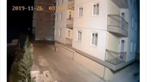 ВИДЕО: Животните порано го осеќаат земјотресот