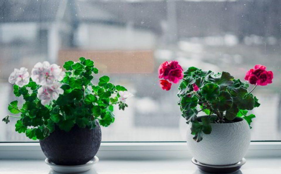 Потребни се само две состојки: Вака ќе ги заштитите вашите собни цвеќиња во зима