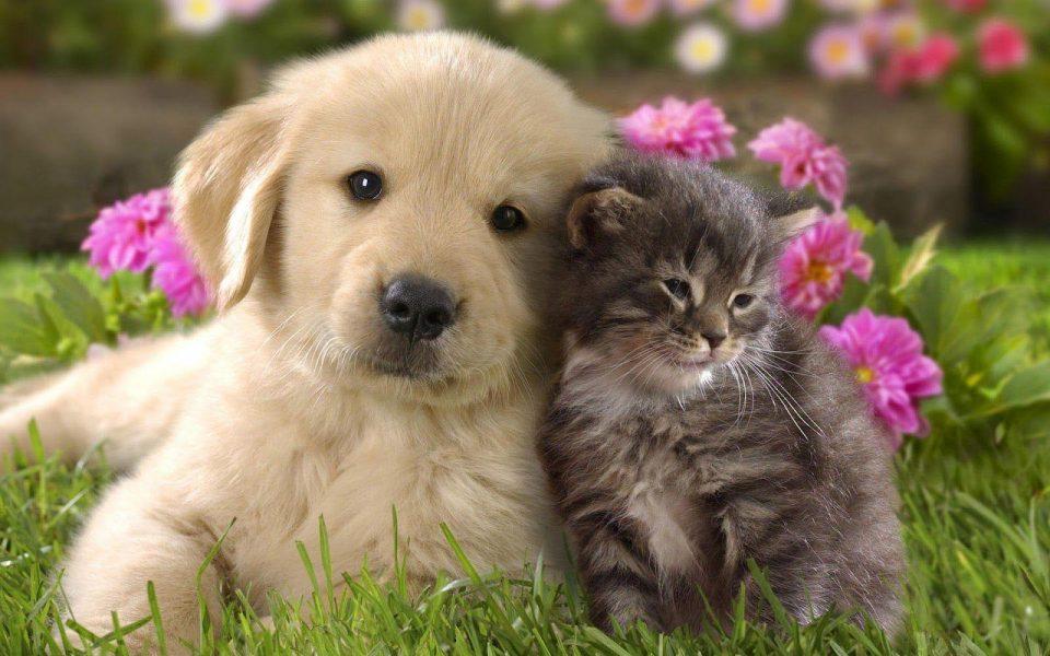 Петардите и огнометите предизвикуваат стрес и смртност кај кучињата и мачките