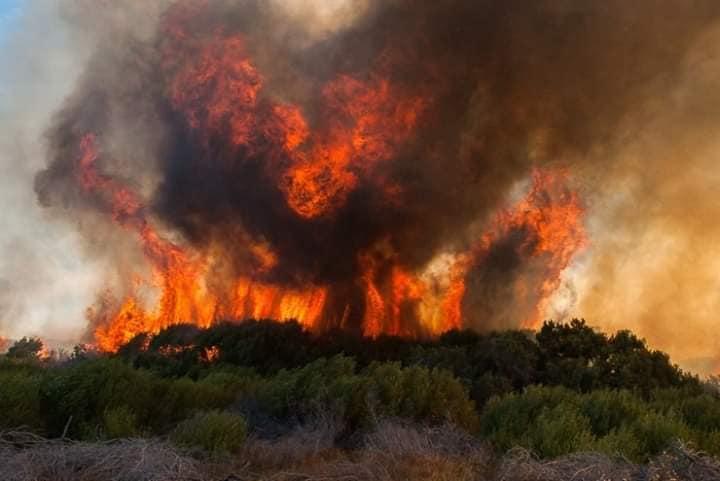 Голем пожар на Кипар во должина од 20 километри, превентивно евакуирано село