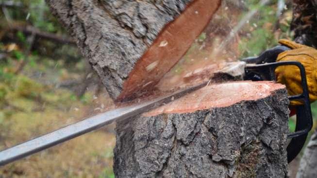 Беровец повреден при сеча на дрва