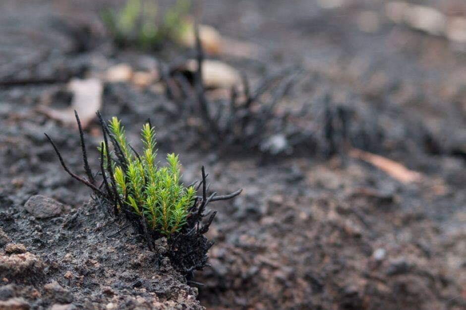 ФОТО: Природата повторно докажа дека му пркоси на човекот – неверојатни слики од опожарената Австралија