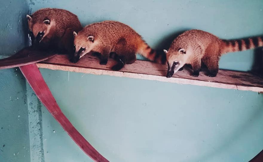Нови животни во скопската Зоолошка градина (ФОТО)