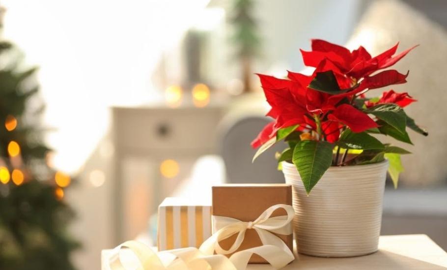 Божиќна ѕвезда – украс за новогодишните и божиќните празници