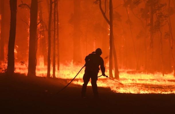 Австралиската Влада оддели 50 милиони долари за спас на загрозените животни