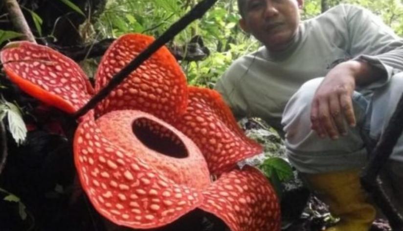 Пронајден најголемиот цвет на светот (ФОТО)