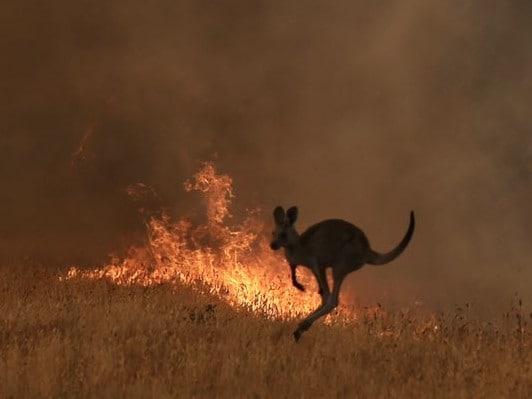 Австралија: Минатата година во пожарите настрадаа три милијарди животни