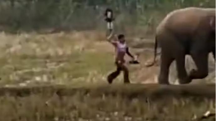 Човек удри слон со стап, па трчаше преплашен од реакцијата на животното (ВИДЕО)