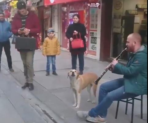 Ова момче свири прекрасно, но неговото куче ги собира симпатиите (ВИДЕО)