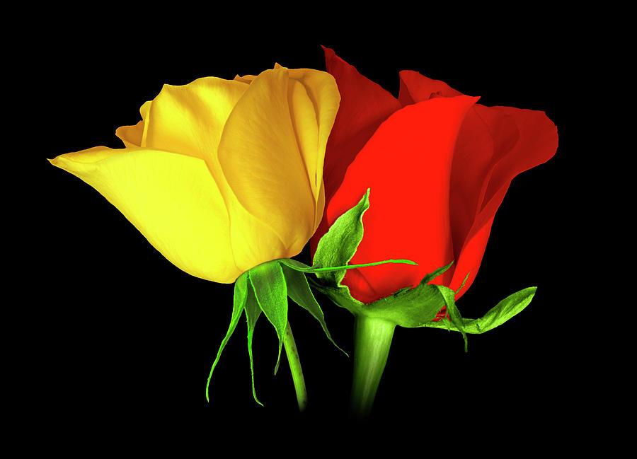 Сe ближи 8-ми Март: Каква боја на рози да подарите и какво значење имаат?