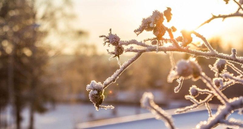 Сончево и студено време со засилен ветер